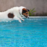 Pet Safety Around Pool